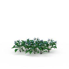 蓝色小花植物3D模型3d模型