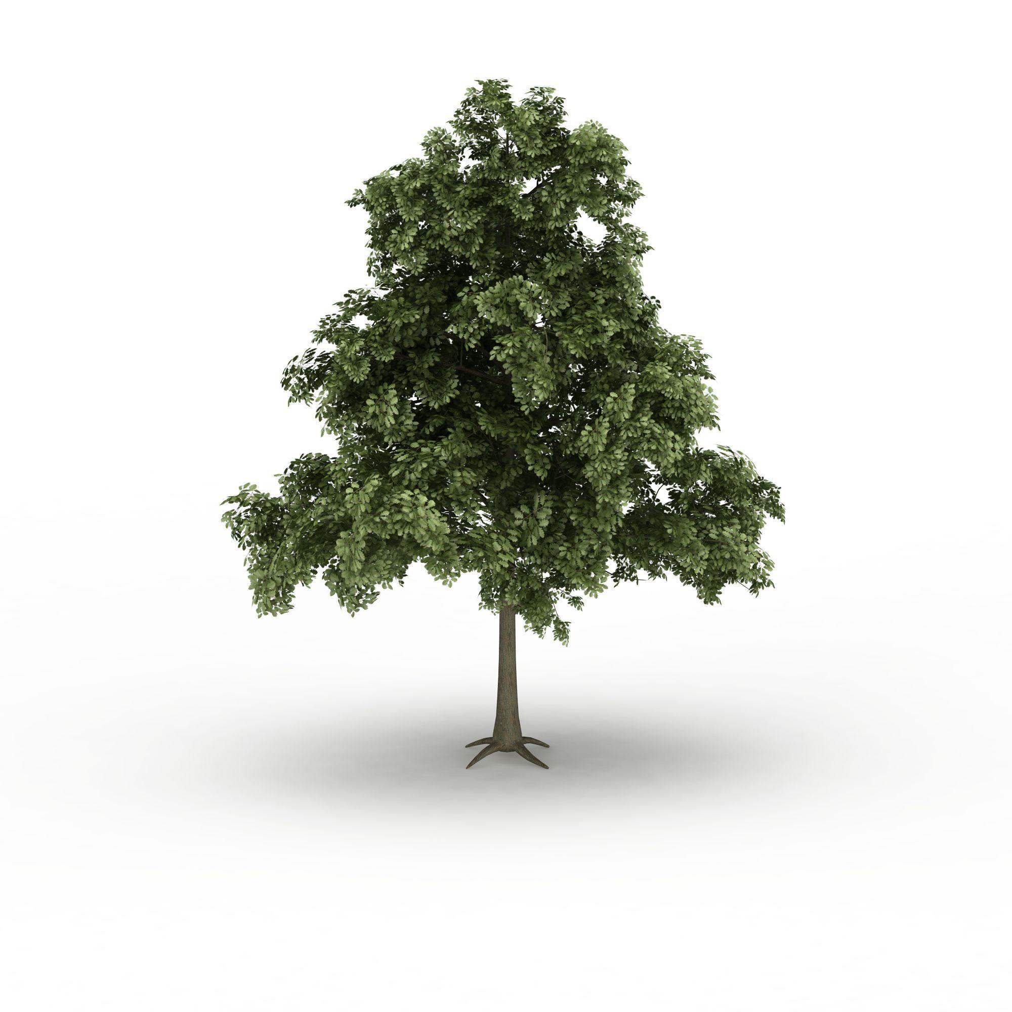 壁纸 盆景 盆栽 树 植物 2000_2000