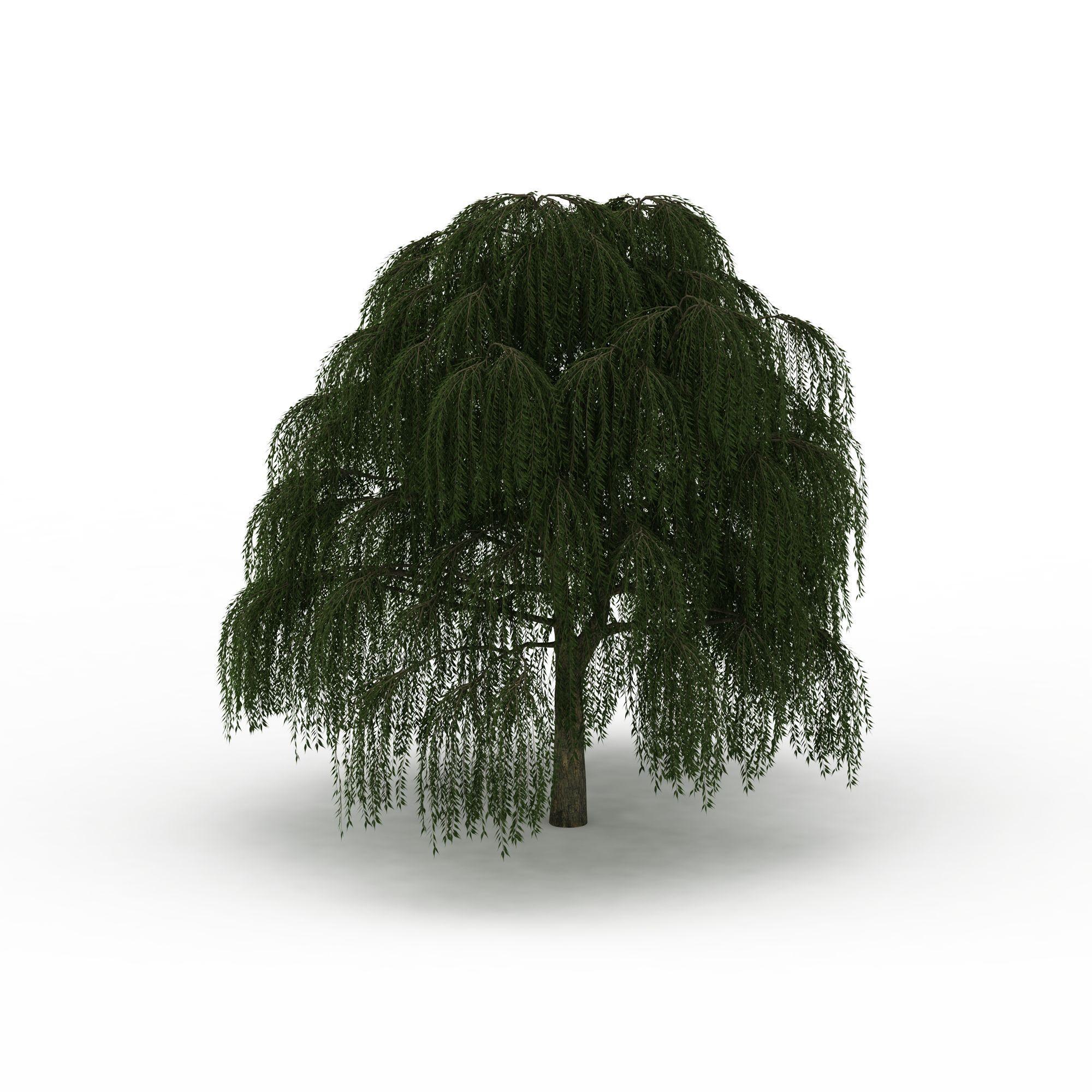 柳树png高清图片下载
