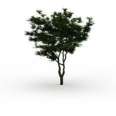 绿色景观树3D模型3d模型