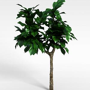 3d大<font class='myIsRed'>葉子</font>觀賞樹模型
