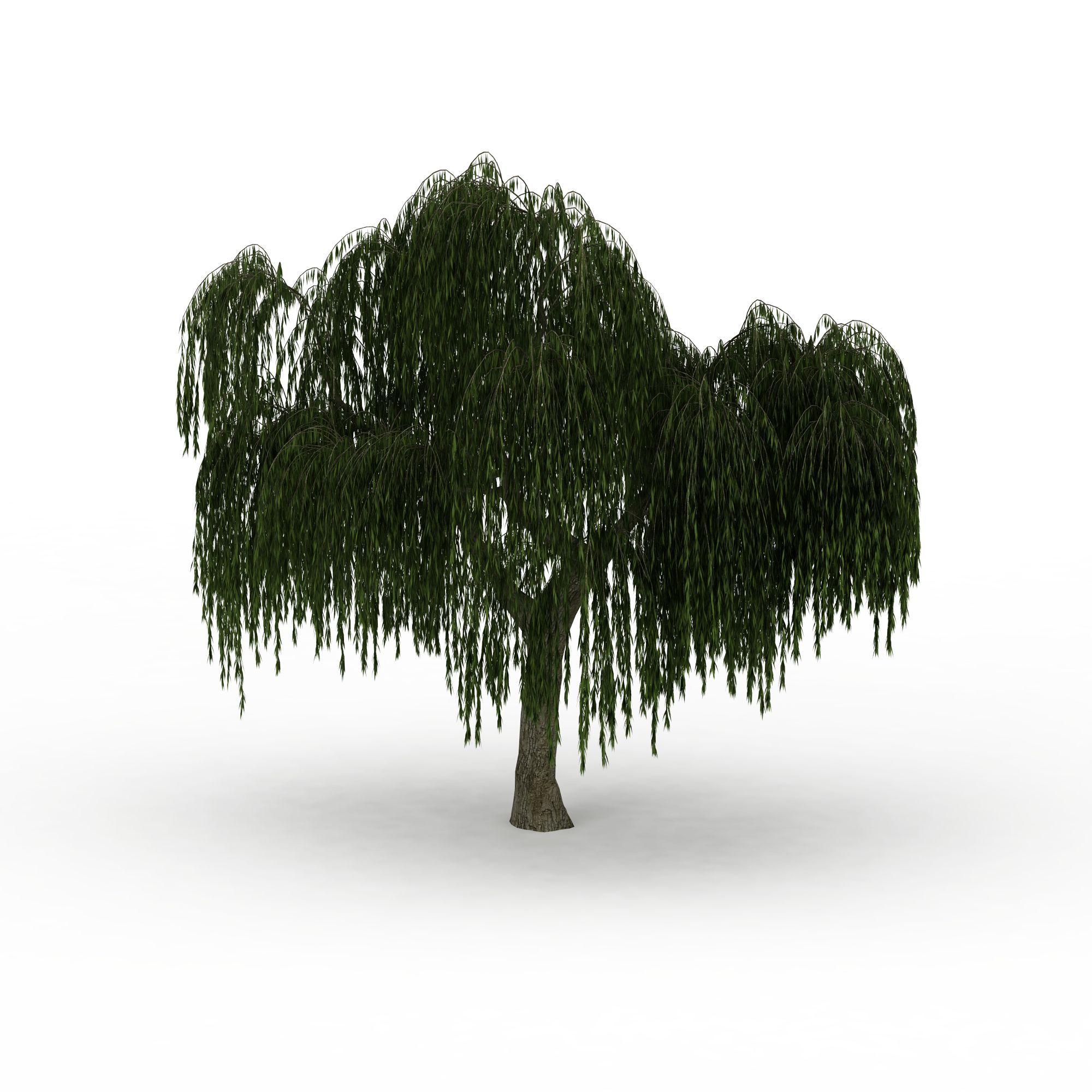 茂盛柳树png高清图片下载