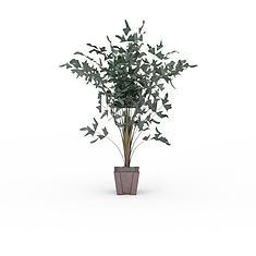 室内盆栽3D模型3d模型