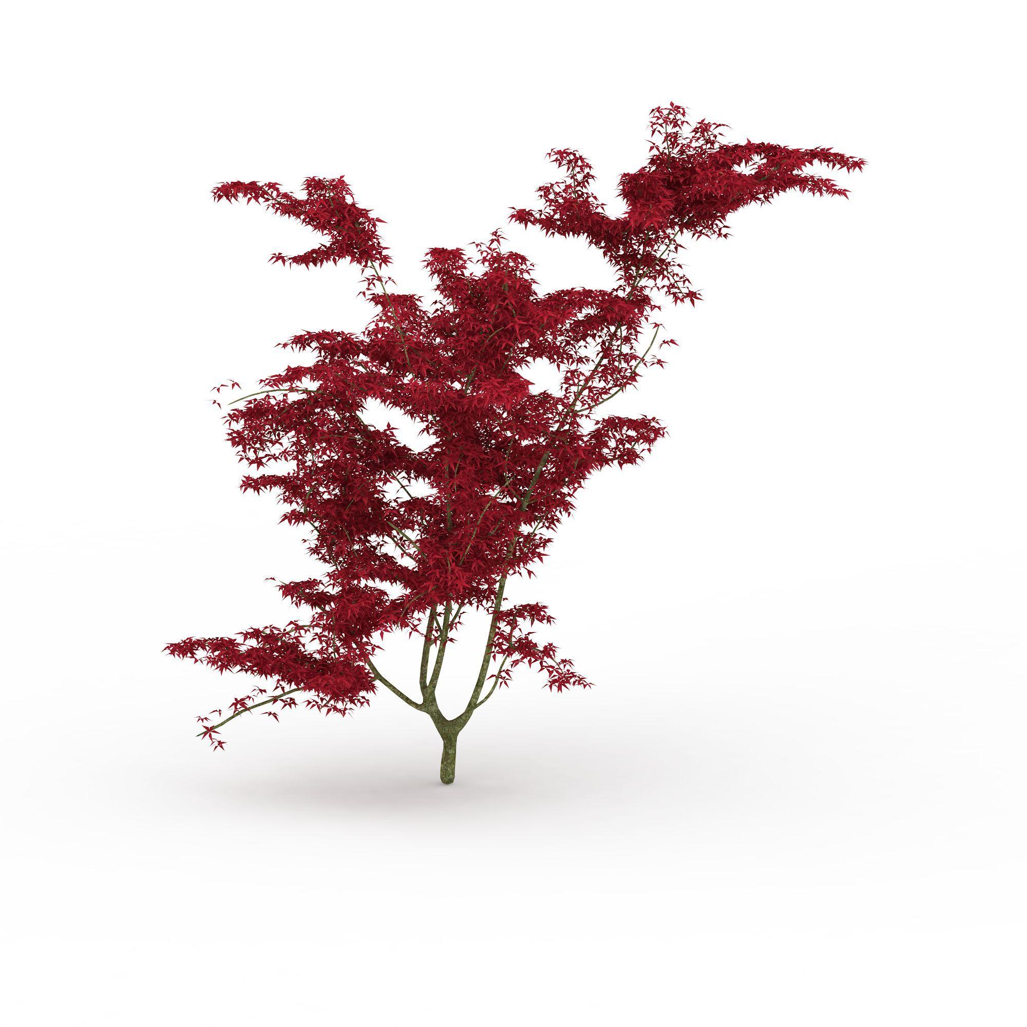 枫树png高清图片下载