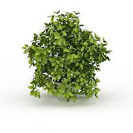 盆栽园艺景观3D模型3d模型