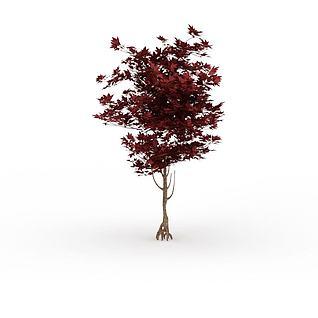 公园枫树3d模型