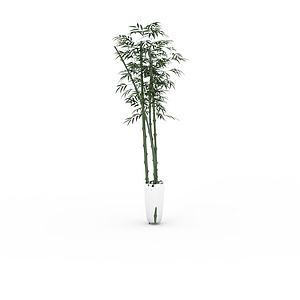 綠竹盆栽模型