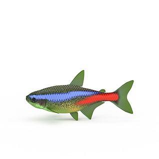 热带海鱼3d模型