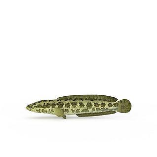 斑点大鱼3d模型
