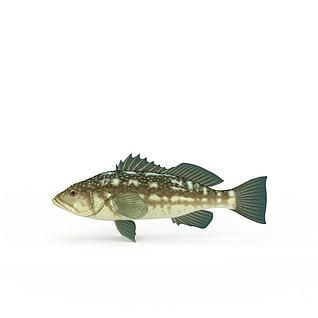 脆鲩鱼3d模型