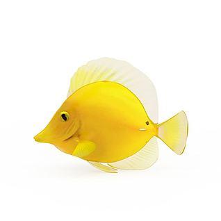 黄金鱼3d模型