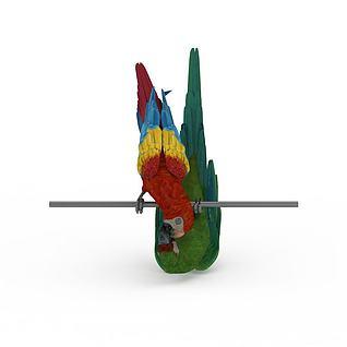 情侣鹦鹉3d模型
