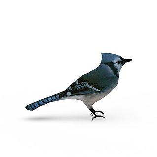 蓝知更鸟3d模型
