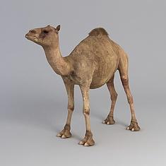 单峰骆驼3D模型3d模型