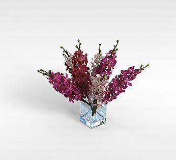 室内观赏花