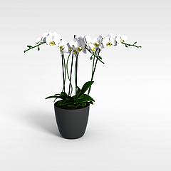 观赏植物模型3d模型