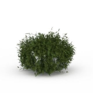 灌木<font class='myIsRed'>植物</font>3d模型