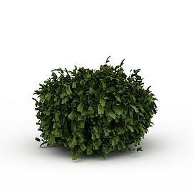 绿色观叶植物3d模型