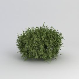 3d灌木植物模型