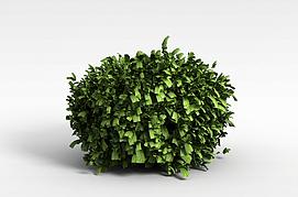 3d绿色观叶植物模型