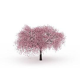 樱花树模型