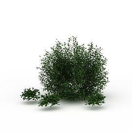 灌木丛3d模型