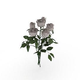 3d仿真白玫瑰花模型