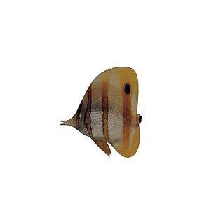 淡水观赏鱼3d模型