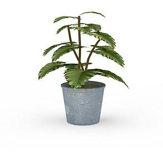 绿植花卉3d模型