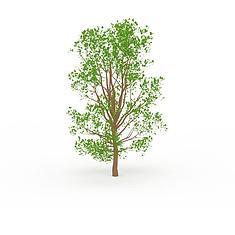 悬铃木3D模型3d模型