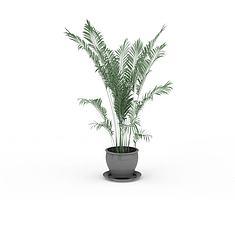 散尾葵盆栽3D模型3d模型