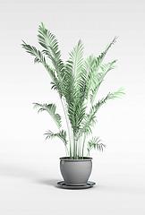 散尾葵盆栽模型3d模型