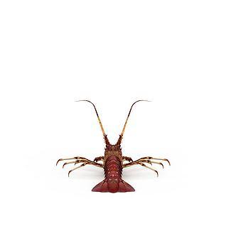 海虾3d模型