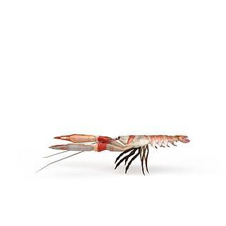 南美虾3d模型