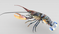 龙虾3d模型
