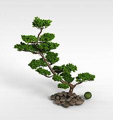公园松树模型3d模型