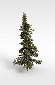3d朴<font class='myIsRed'>树</font>模型