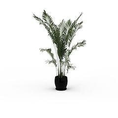 袖珍椰子树模型3d模型