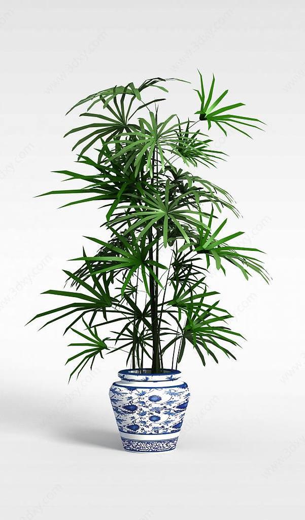 袖珍椰子树