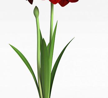 创意装饰花