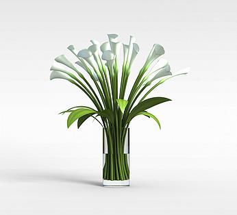 办公室水培花