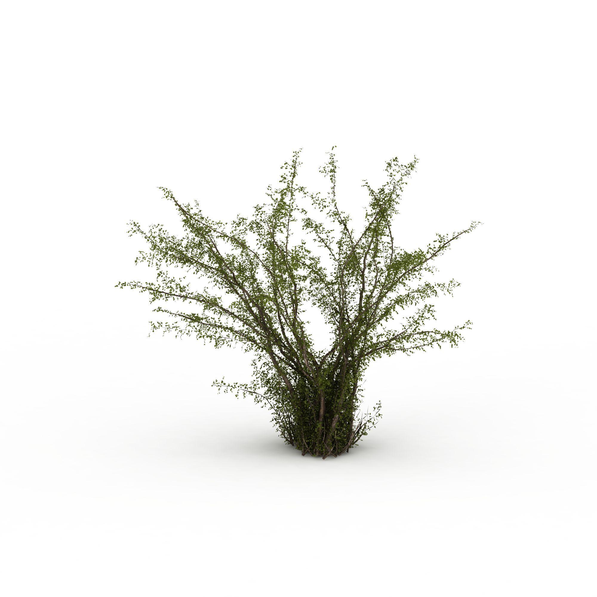 景观树图片_景观树png图片素材_景观树png高清图下载