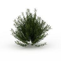 半灌木3D模型3d模型