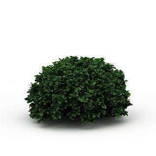 海桐灌木3d模型