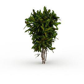 灌木绿植3d模型