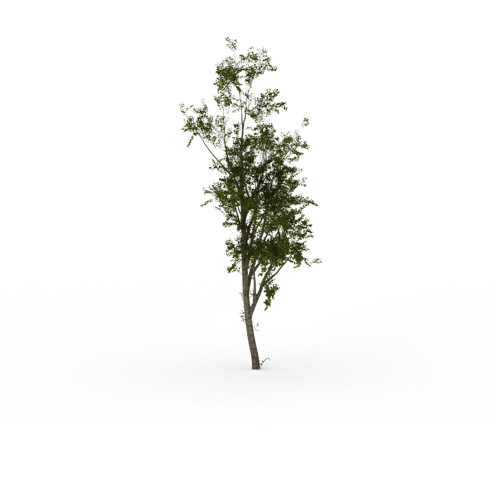 植物 树 槐树3d模型 槐树png高清图  槐树高清图详情 设计师 3d学院