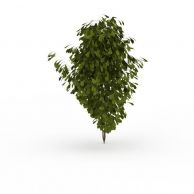 观赏绿植3D模型3d模型