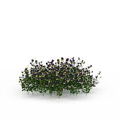 开花绿植模型3d模型