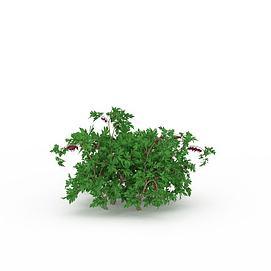 开花灌木3d模型