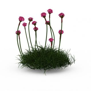 开花绿植3d模型